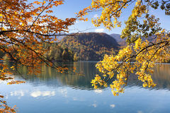 Golden and orange leaves over Lake Bled, Slovenia. Golden and orange leaves on branches of trees over Lake Bled, Slovenia, blue sky and water Stock Photography