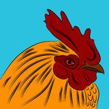 Golden Orange Rooster Royalty Free Stock Photography