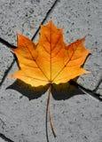 Golden orange and yellow maple leaf on asphalt. Fall background.  stock image