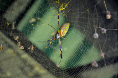Golden Orb Spider in Corcovado National Park, Costa Rica Stock Image