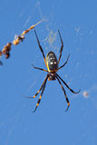 Golden orb web spider against blue sky Royalty Free Stock Photography
