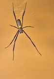 Golden orb web spider sitting in its web Stock Photo