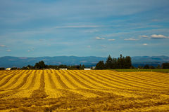 Golden Oregon field Stock Photos
