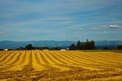 Golden Oregon field. An open, golden agricultural or farm field in Willamette Valley, Oregon Stock Photos
