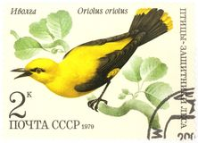 Golden Oriole Oriolus oriolus - old Russian stamp Stock Photography