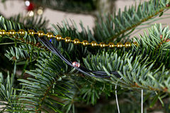 Golden ornament on pine tree branch. Royalty Free Stock Images