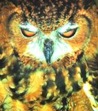 Eurasian Eagle Owl(Bubo bubo)  closeup Stock Photo