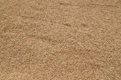 Golden Paddy Rice Seeds Background Stock Photography