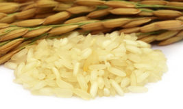 Golden paddy seeds with uncooked rice Royalty Free Stock Photography