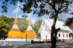 Golden pagoda. Twin golden pagoda and white sanctuary with the pine tree foreground Royalty Free Stock Photography