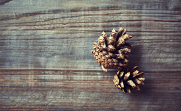 Golden painted pine cones Stock Image