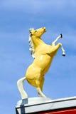 Golden Palimino Stock Image