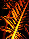 Golden Palms. A branch of a palm tree golden orange light looks like a treasure made of gold in an egyptian pharohs tomb Royalty Free Stock Images