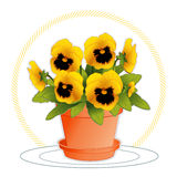 Golden Pansies. Clay flowerpot with saucer filled with blooming golden pansies. Viola hortensis. EPS8 organized in groups for easy editing Royalty Free Stock Photos