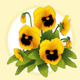 Golden Pansies Stock Images