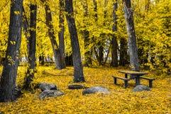 Golden Park. A park in Golden Autumn Royalty Free Stock Photo