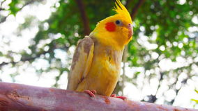 The golden parrot. In happy day Stock Photos