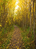 Golden Path of Fall Stock Images
