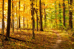 Golden path Royalty Free Stock Photography