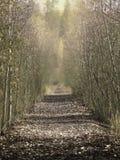 Golden Pathway Royalty Free Stock Photos