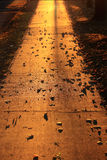 Golden pavement Stock Images