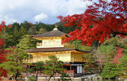 Golden Pavilian at Kinkakuji Temple with red leaves in Autumn se Stock Photo