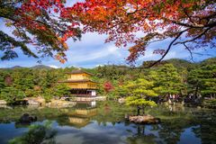 Golden Pavilion at Kinkakuji Temple at fall. Golden Pavilion at Kinkakuji Temple with red maple leaves and autumn garden in Kyoto, Japan. One of the most famous Royalty Free Stock Image