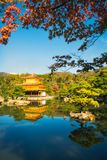The Golden Pavilion with red maple leaves in the foreground in K. The Golden Pavilion or Kinkaku-ji Temple with reflections in the water and red maple leaves in stock images