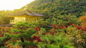 Golden pavillion or Kinkakuji in autumn Stock Image