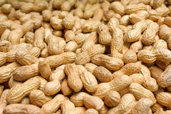 Golden peanuts in shells Stock Photos