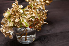 Golden Pear flowers royalty free stock photo