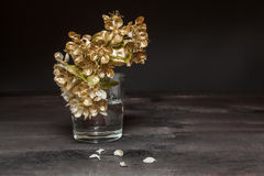 Golden Pear flowers. In a vase on a dark background royalty free stock image