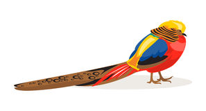 Golden Pheasant. Vector Illustration. Illustration golden Chinese pheasant on a white background Royalty Free Stock Image