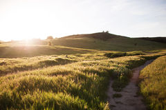 Golden. A photo of a field taken at sunset Royalty Free Stock Image