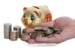 Golden piggy bank Stock Image