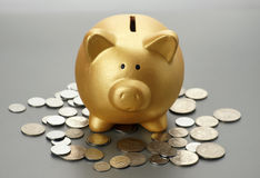 Golden piggy bank with coins. Financial concept Stock Image
