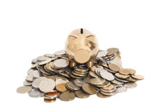 Golden piggy bank on coins Stock Images