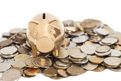 Golden piggy bank on coins Stock Photos