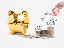 Golden  piggy bank filled with coins on white background.Saving. Investment colorful concept.Watering can and money growing concept for business investment Royalty Free Stock Images