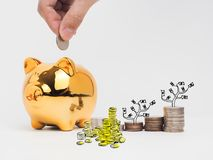 Golden  piggy bank filled with coins on white background.Saving. Investment colorful concept.Watering can and money growing concept for business investment Stock Photography