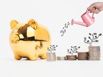 Golden  piggy bank filled with coins on white background.Saving. Investment colorful concept.Watering can and money growing concept for business investment Royalty Free Stock Photo