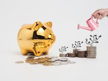 Golden  piggy bank filled with coins on white background.Saving. Investment colorful concept.Watering can and money growing concept for business investment Stock Image