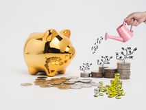 Golden  piggy bank filled with coins on white background.Saving. Investment colorful concept.Watering can and money growing concept for business investment Royalty Free Stock Photography