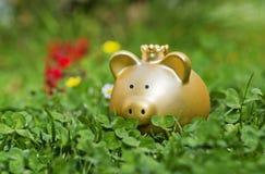 Golden piggy bank on a meadow Royalty Free Stock Photos