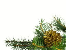 Golden pine cone Stock Photo