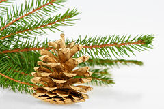 Golden pine cone with conifer Stock Images