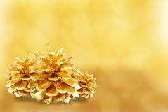 Golden pine cone isolated Royalty Free Stock Photos