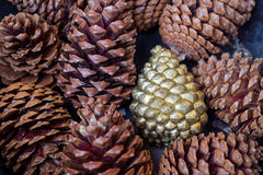 The golden pine cone Stock Photo