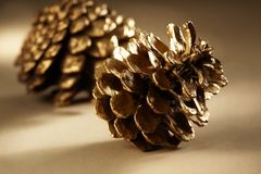 Golden Pine Cones. With details Royalty Free Stock Image
