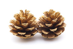 Golden pine cones Stock Photography